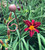 Decorative Plant Stakes
