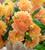 A World of Dahlias Collection