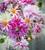 Fresh Dahlia Collection