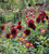 The Cutting Garden, 25 years on with Sarah Raven at Barns & Yard at Hanley Hall, Worcestershire