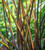 Pennisetum purpureum 'Vertigo'