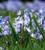 Aegean Blue Bulb Collection