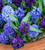Amethyst and Sapphire Hyacinth Collection