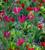 Pillarbox Perennial Picking Collection