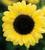 Vintage Sunflower Mix
