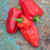 Sweet Pepper 'Friggitello' F1