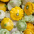 Summer Squash Collection