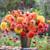 Marmalade Dahlia Collection