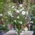 Sparkling Fountain Collection