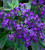 Sarah's Favourite Heliotrope Collection