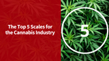 Top 5 Cannabis Scales [Updated for 2021]