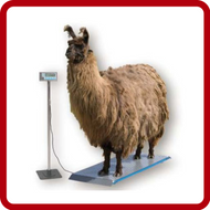 Brecknell Veterinary Scales