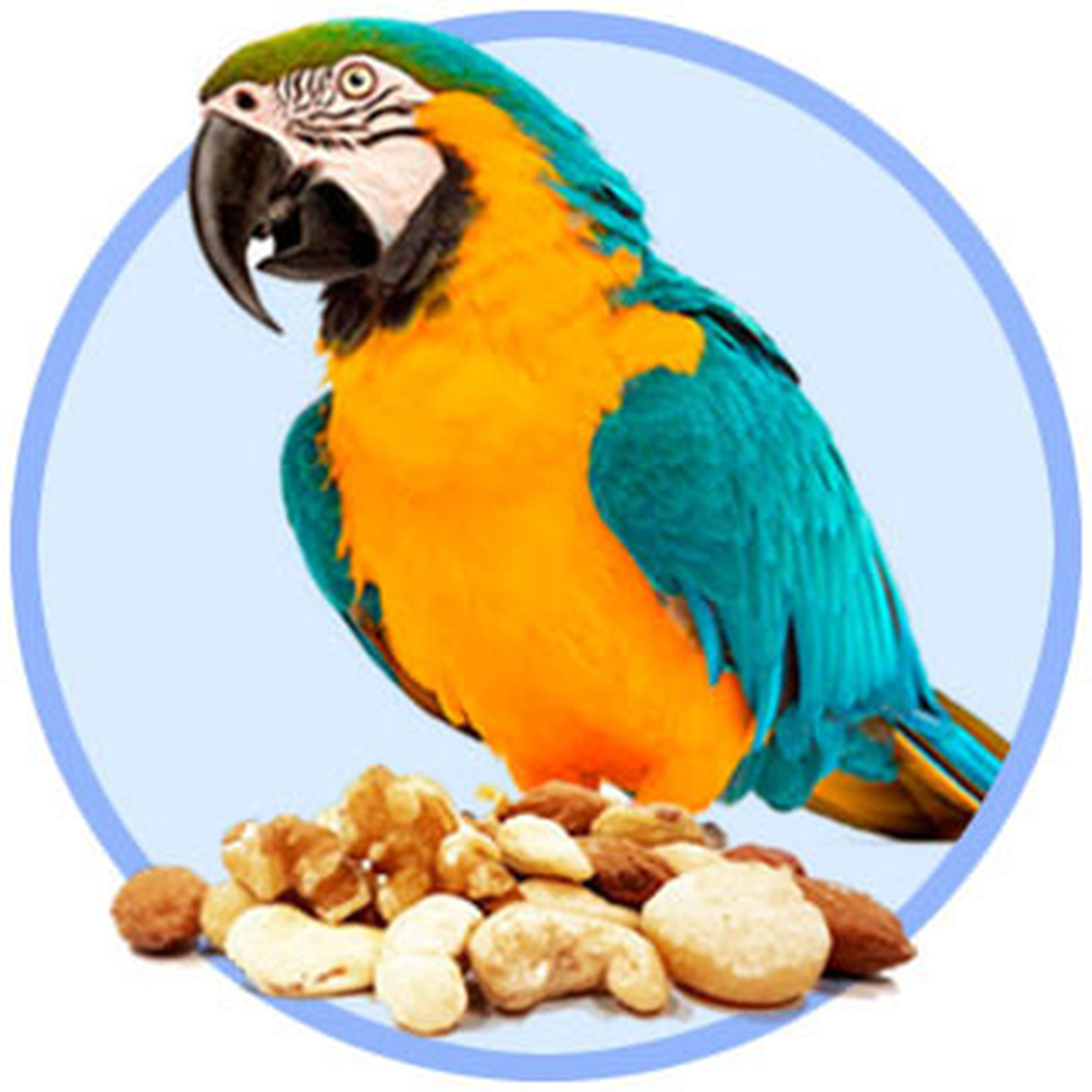 Nuts For Parrots & Macaws