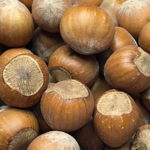 In shell filberts (hazelnuts). Sold by the LB.