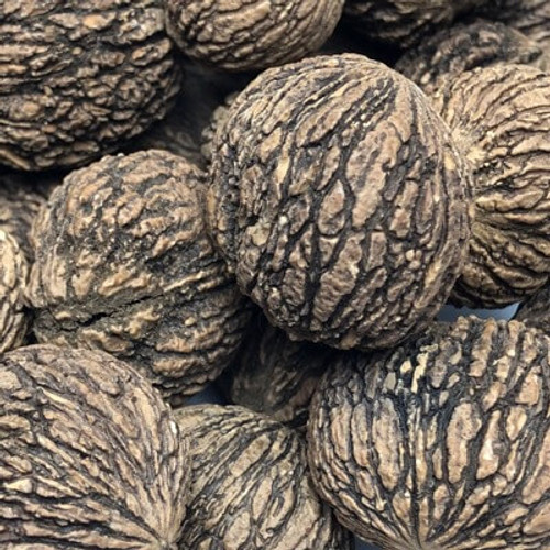 In shell black walnuts. Sold by the lb.
