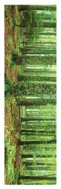 "Rainforest Slim Print - 12"" X 36"""