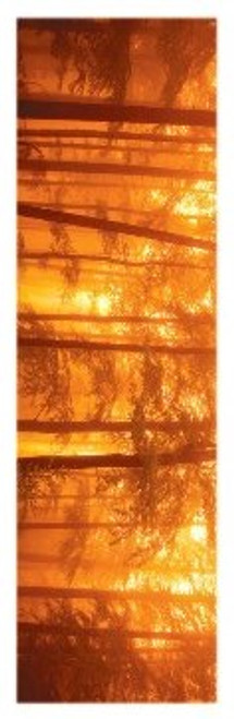 "Morning Mist Slim Print - 12"" X 36"""