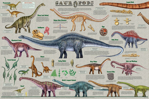 Sauropods Educational Poster 36x24