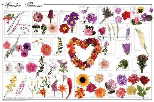 Garden Flowers Educational Poster 36x24