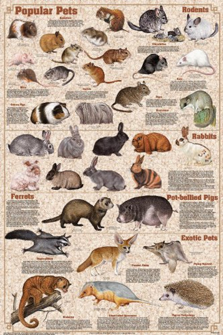 Popular Mammal Pets Educational Science Animals Classroom Chart Print Poster 24x36