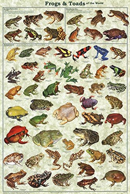Frogs & Toads of the World Educational Science Classroom Chart Print Poster 24x36