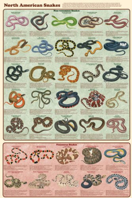 North American Snakes Educational Chart Poster 24 x 36