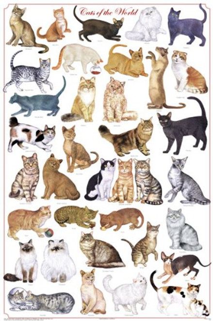 Cats of the World - Felines Poster (24 x 36)