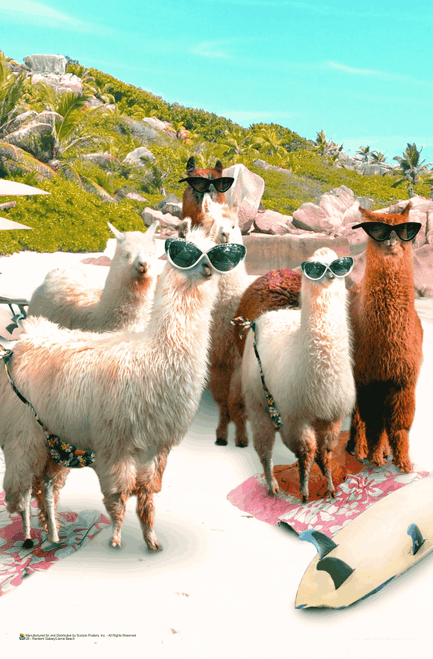 "Llama Beach by James Booker Mini Poster - 11"" x 17"""