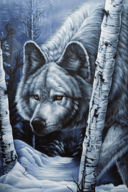"""White Wolf by Jenny Newland Poster - 24"""" x 36"""""""