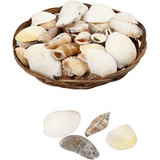 Basket of Assorted Shells