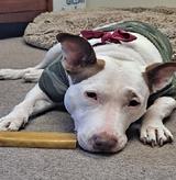 Why we love Yeti Dog Chews