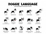 Understanding A Dog's Body Language