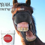 The Importance of Keeping up with your Horse's Dental Hygiene