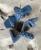 Betty Heel in Blue