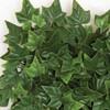 "A-14426010"" Ivy Mat- Tutone Green Closeup"