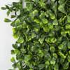 Close Up of  Tutone Green Boxwood