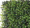 Close Up of Boxwood Leave