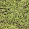 A-112640 Close up of Moss Mat