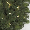 Close Up of Allegheny Fir Tree