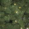 Close Up of Nikko Fir Tips with LED LightsShort Needle