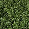 Close up of UV Boxwood Leaves