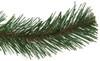 Virginia Pine Long Needle