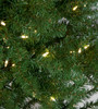 Close up of Fir Needles and LED Lights