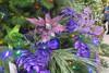 Light Purple Poinsettias, Green Stars, Glitter Purple Locust Leaves and Purple Peacock Leaves