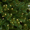 Close Up of Commercial Pine Trees
