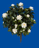 28 Inch Outdoor Gardenia Bushes in Red Color or White Color
