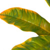 Close Up Artificial Croton Plant for Outdoor Use