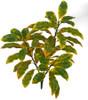 A-184020Polyblend Outdoor UV Croton