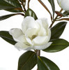 Close Up of Magnolia Flower