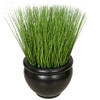 Grass Potted in Decorative Planter